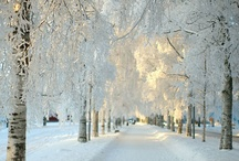 White landscapes / The Beauty of white in the Landscape