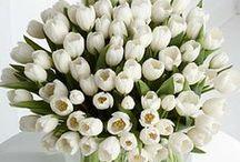Tulips (:
