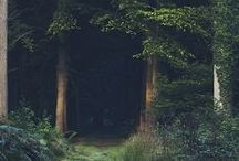 :: the woods ::