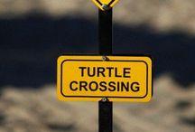 W. T U R T L E S / Turtles of all kinds. € / by JohnPaul Doerr