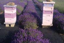 Bees & beekeeping
