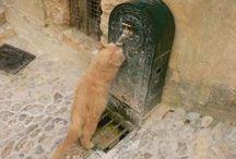 Animaux / Quelques photos d'animaux prisent dans le département du Var (www.vardecouverte.com)