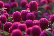 Garden Stuff / by Becca Bishop