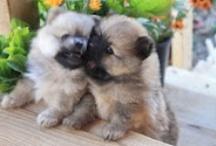 Darling Dogs