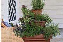 In The Garden / Garden related products, garden decor / by TeamPinterest