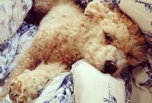 Puppy Love! / by Jeamy