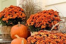 Fall Decor for your Home