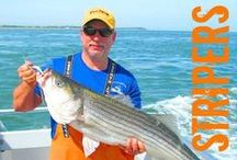 Fishing Fun / Make fishing fun by discovering secrets of catching more and larger fish...striped bass (stripers), etc.