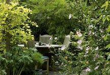 Garden / by Michelle Haley
