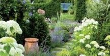 Landscape Design Dream Board - Landscape Design Ideas / Your exclusive look at Daily Harvest Designs' landscape design picks for functional, easily maintained, edible, medicinal, and gorgeous landscapes.