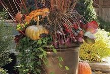 An Enchanting Fall Garden / Savor the rich hues and earthy scents of autumn as you unwind with your loved ones around your fire pit, holding an oversized mug of hot apple cider.