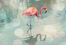 Flamingos°