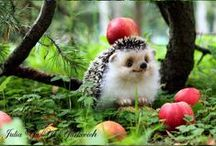 The cutest things / Baby animals and whatever is cute