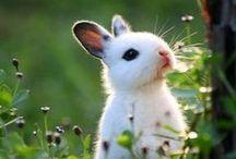 Animals/ Baby Animals