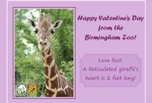"""Birmingham Zoo Valentines! / The Birmingham Zoo has created free printable Valentines for all of the animal lovers in your life! Each Valentine has a different """"love"""" fact about 12 different animals!"""