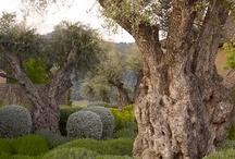 garden / by Brass Acorn