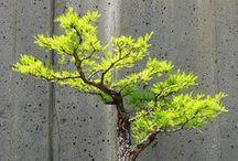 Bonsáis / Los mejores bonsáis del mundo