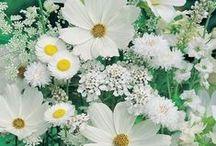Virágok