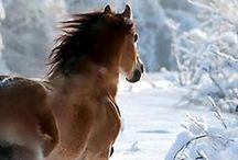 Horses. / Paarden. / by Mirjam B.