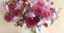 Imagini flori