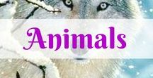 Animals / Cute wild animals big and small. Pets, wild, water, and everything in between.  Everything for pets - Pet supplies plus cute and funny pet pictures with a collection of pet essentials - collars, leashes, cages, pet safety, and more. Healthy pet Recipes. Natural and affordable pet care products, tips, and useful information.