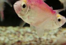 Fishy Squishy!! <*///>< / by Shannon Watson