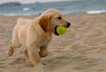 Doggies :) <33🐶🐾 / by Shannon Watson