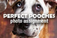 Perfect Pooches | Photo Assignment / A man's best friend is sometimes more photographed than, well, the man. Show us how your dog is the perfect pooch by hashtagging your Pixily album #perfectpooches