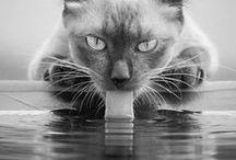 Cats / Cats, #cat, #animals