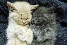 cute, just cute!!