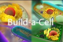 Science: The Cell / Geared towards a middle school classroom (6-8), this board contains ideas for teaching: cell structure, cell division.