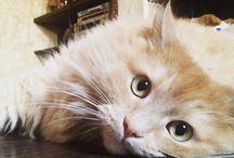 Persivald & Mozzy / #cat #cats #animals #кот #mozzy #mozzythecat #котенок #котэ #котофото