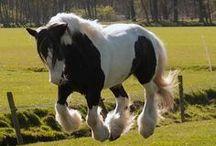"""Paarden / wij zijn echte """"paardengekken"""", vandaar dat wij alle paarden mooi en leuk vinden."""