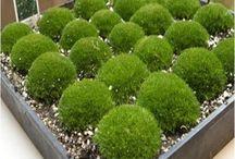 Garden - Container Plants