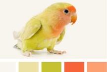 Color / Palettes & Schemes