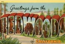 Greetings from the Redwoods / Tour through the Redwood Highway