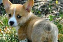 Fluff and cuteness