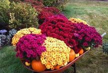 Mums the Word / It's always hard to say goodbye to our favorite summer blooms, but we love to say hello to our new fall mums! Here are some tips on how to care for your mums this autumn.