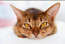 Pielęgnacja kotów