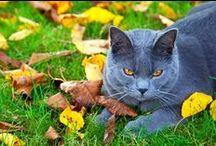 Zdrowie kotów