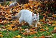 Obyczaje kotów