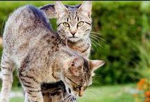 Gatunek kot domowy