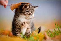 Rozmnażanie kotów