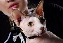 O wystawach kotów