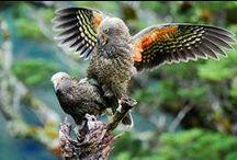New Zealand  Naive Birds, Flowers, Trees