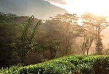 Les Jardins de Dilmah
