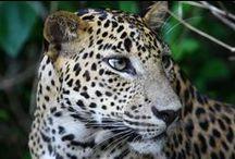 Dilmah Conservation / La protection de la nature au coeur de l'engagement de Dilmah