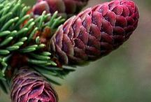 pine cones & others