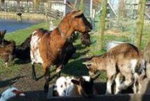 Dieren bij BroekerVeiling / Welke dieren kan je zoal tegenkomen tijdens je bezoek aan Museum BroekerVeiling?
