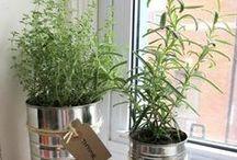 Tuinieren binnenshuis / Geen tuintje of weinig ruimte? Binnen kan je ook veel verschillende dingen planten. Hier vind je inspiratie voor een binnentuintje.